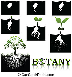 plantkunde