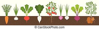 plat, terrein, ontwerp, groente, wortel, textuur