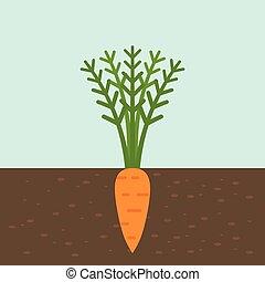 plat, terrein, wortel, groente, ontwerp, wortel, textuur