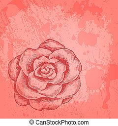 roos, vector, getrokken, kaart hand