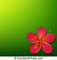 roze, frangipani, groene achtergrond