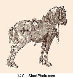 saddle., paarde