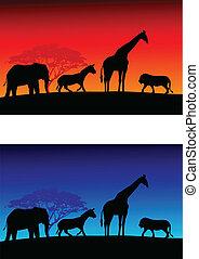 safari, achtergrond