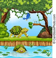 schildpad, jungle
