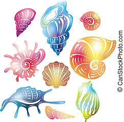 seashell, gekleurde