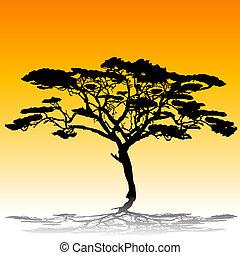 silhouette, acacia tree