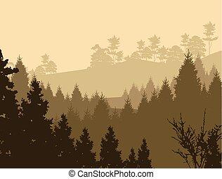 silhouette, beauty, pijnboom woud