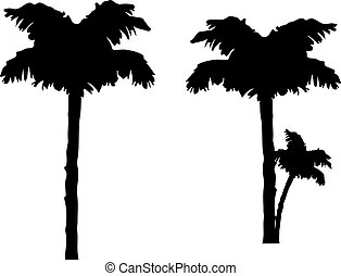 silhouette, palmboom