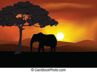 silhouette, safari, achtergrond