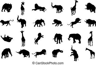 silhouette, safari, dier, afrikaan