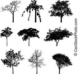 silhouettes, bomen