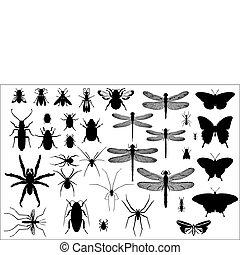 silhouettes, insecten, spinnen