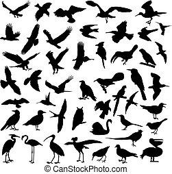 silhouettes, vogels