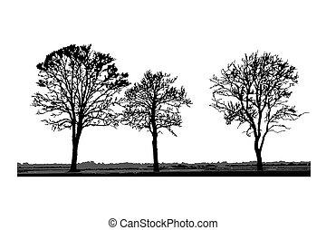 silhouettes, vrijstaand, boompje, witte , achtergrond.