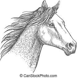 slagen, verticaal, paarde, schets, potlood, hoofd