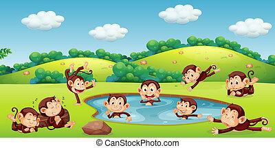 spelend, aap, natuur