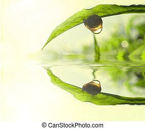 thee, concept, blad, groene, foto