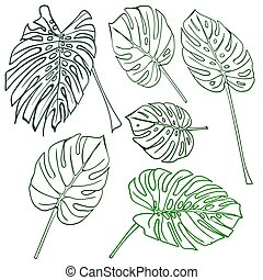 tropische , silhouette, leaves., monstera