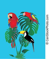 tuscan, forest.., papegaaien, regen, zittende