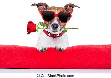 valentines, dog, dag