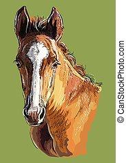 vector, hand, tekening, 29, verticaal, paarde