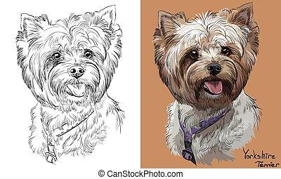 vector, monochroom, verticaal, tekening, yorkshire, hand, kleurrijke, terrier
