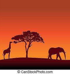 vector, silhouette, ba, safari, afrikaan