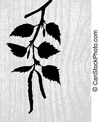 vector, silhouette, berk, achtergrond, hout, tak