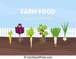 vegetables., illustration., bed, wortel, anders, vector