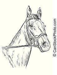 verticaal, paarde, 22, vector