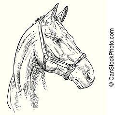 verticaal, paarde, vector, 27