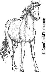 verticaal, paarde, witte , satnding, schets