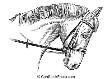 verticaal, toom, paarde
