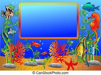 visje, frame, algen, onderzees