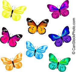 vlinder, set, pictogram