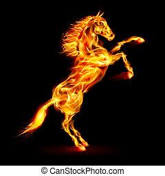 vuur, rearing, paarde, boven.