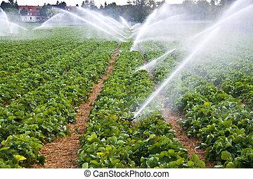 water nevel, landbouw