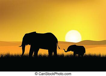 wild, elefant