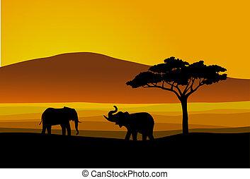 wild leven, afrika