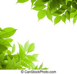 wisteria, hoek, op, -, pagina, groene achtergrond, blad, witte , grens, bladeren