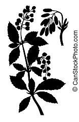 witte , vector, silhouette, barberry, achtergrond