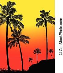 zomer, silhouette, abstract, bomen, tropische , palm, bos